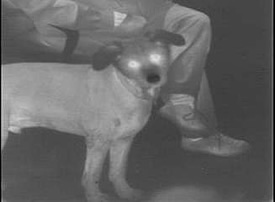 thermal image of a dog and a human